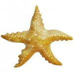 Jet Creations Inflatable Aquatic Animals, Starfish, 20 Inches Long [Pack of 6]