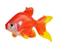 Jet Creations Inflatable Aquatic Animals, Goldfish, 20 Inches Long [Pack of 6]